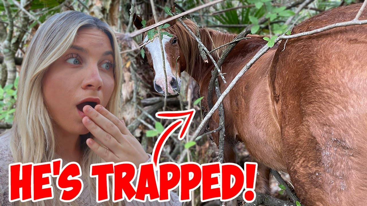 My Horse Got TRAPPED & COULDN'T GET OUT! *Had to Rescue Him* - download from YouTube for free