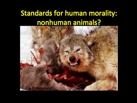 Are animals part of our moral