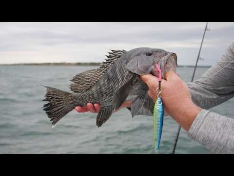 How-To: Fishing For Sea Bass On The Southside (Hogy Herring Jig)