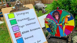 spin-the-wheel-buy-the-animal
