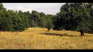 FOR SALE BEAUTIFUL WORKING CATTLE FARM IN CASWELL COUNTY, NC
