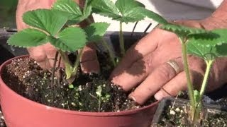How to Transplant Potted Plants Properly : Planting Tips