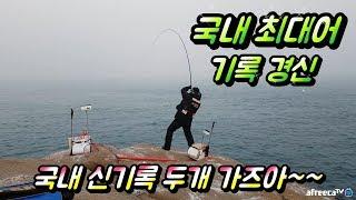 국내최대어 두개째 신기록 탄생/Fishing/낚시