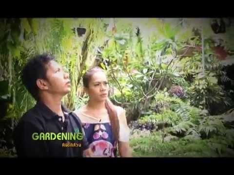 Gardening คนรักสวน 210558/1 (เฟิร์นและของตกแต่งสวน)