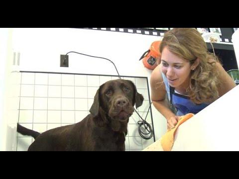 Barks n bubbles self serve pet grooming centereach ny youtube barks n bubbles self serve pet grooming centereach ny solutioingenieria Gallery