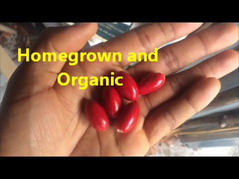 Organic berries : The Miracle Berry