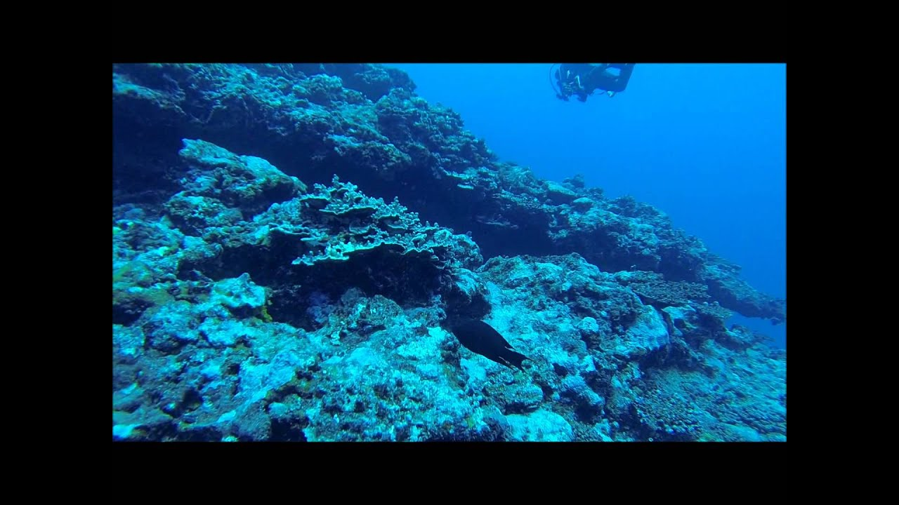 "Scuba Diving In Samoa With Aqua Samoa ""The Tunnel"""