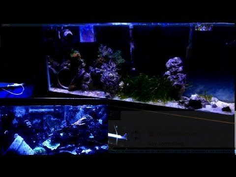HD Relax & Watch the Wave Action @ #BabyJesus' Saltwater #FishRoom 04.17.18 Reef Aquarium Live Chat