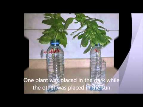 influence of light on plant growth The influence of mineral nutrient availability, light intensity and co2on growth and shoot:root ratio in young plants is reviewed special emphasis in this evaluation.