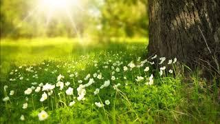 Kuş ve  Su sesi. Dinlendirici, Meditasyon, Yoga. Doğanın Sesi- Relax