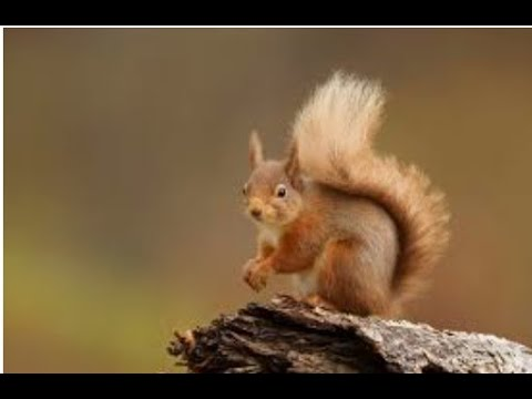 Squirrel, Squirrel shake your bushy tail