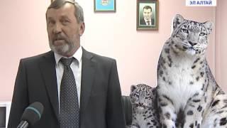 В Горном Алтае дали имена двум котятам снежного барса