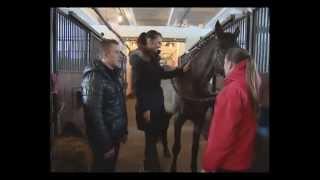 О красоте лошадей