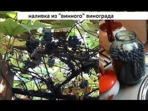 Как сделать виноградную наливку