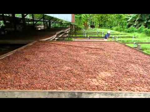 How It's Made  Cocoa Beans   Video   Science Channel