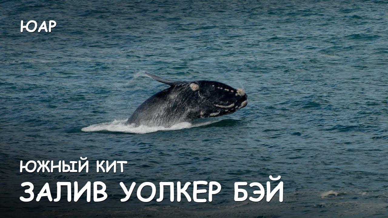 Мир Приключений - Залив Уолкер Бэй. Южный кит. Лучший отдых в ЮАР. Walker Bay. South Africa..