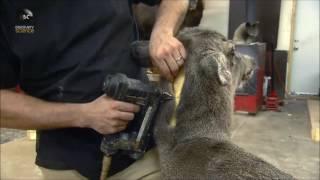 Jak to jest zrobione: Wypchane zwierzęta