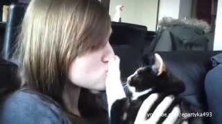Faze amuzante cu pisici si caini ce urasc saruturile