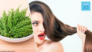 How to Use Horsetail to Help with Hair Growth - Canada 365