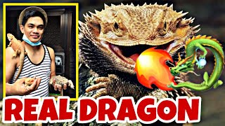 DRAGON IS REAL (BEARDED DRAGON)