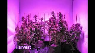 PhytoMax-2 600 Time Lapse