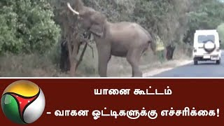 Elephants Crossing Roads- Warning to Motorists! | #Elephants #Motorists