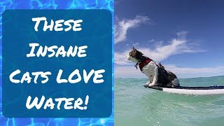 Funny Cats that LOVE Water Best Compilation - Laugh at this Funny Cat Video