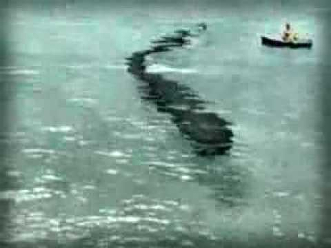 Japanese Sea Monster Sighting - YouTube