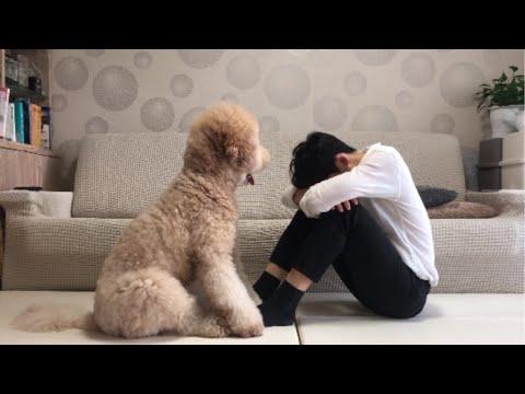 강아지가 울고있는 주인을 달래주는 방법