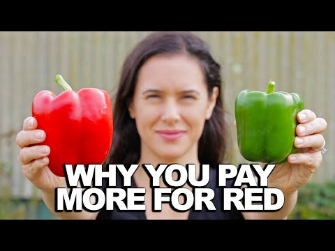 What's the difference between green, orange and red peppers?