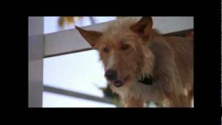 Zeus and Roxanne Starring Kathleen Quinlan  movie review