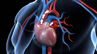 Video How does human circulatory system work – 3D animation – in English download MP3, 3GP, MP4, WEBM, AVI, FLV Oktober 2018