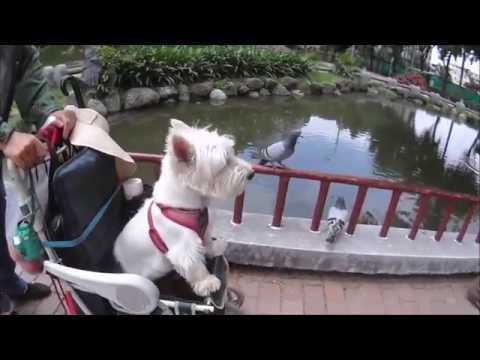 Children's Park Beitun District Taichung Taiwan