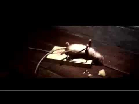 Funny Mouse Nolan Cheese Commercial HD 720p