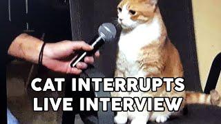 Funny Cat Interrupts Interviews