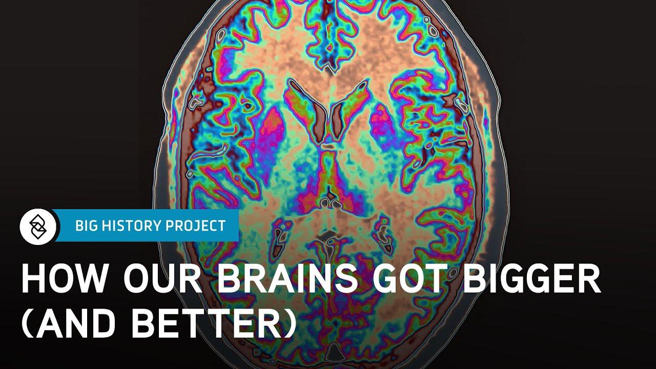 The Brain: A Brief Big History (H2) | Big History Project