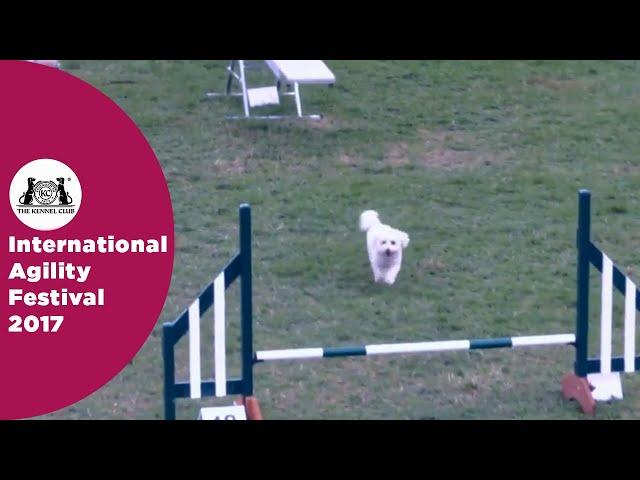 Kennel Club Novice Cup - Small Semi Final | International Agility Festival 2017