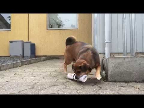 Old school dog doing old school trick