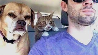 ПРИКОЛЫ С ЖИВОТНЫМИ Смешные Животные Собаки Смешные Коты Приколы с котами Забавные Животные 87