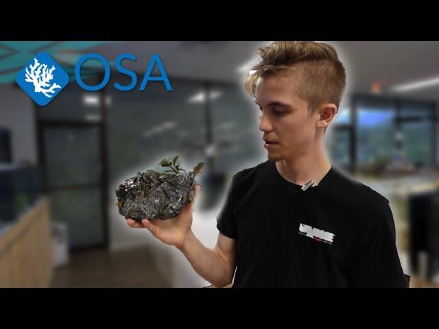 How to Glue Plants for Your Aquarium