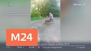 Появились новые подробности в истории заводчицы собак в Подмосковье - Москва 24