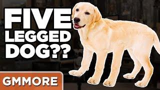 Storytime: 5-Legged Dog