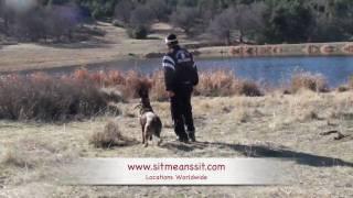 Dog Training In San Diego