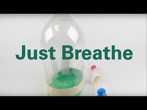 Creating Model Working Lungs Just Breathe