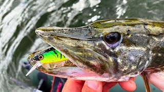 50 ЩУК за рыбалку! АВГУСТ и спиннинг! Как и где поймать мы расскажем! cмотреть видео онлайн бесплатно в высоком качестве - HDVIDEO