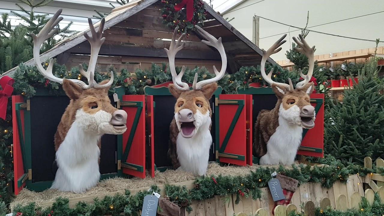 Singing Reindeer At Redfields Garden Centre Youtube