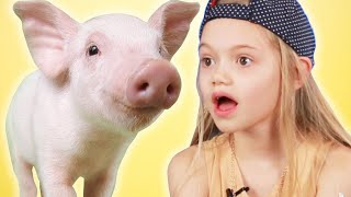 Kids Get Surprised With Mini Pigs