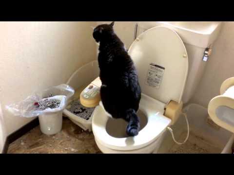 猫 人のトイレでおしっこをするPee in the cat's toilet