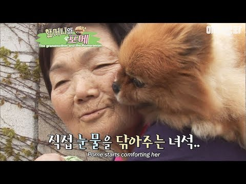 The sad reason that the grandmother is always giving the dog a piggyback ride...