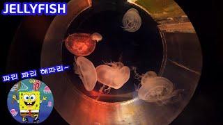 신비로운 해파리 Jellyfish 부산 씨라이프 아쿠아…